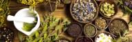 Ganhe qualidade de vida ao aprender a se curar usando plantas medicinais