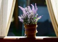 5 plantas que vão fazer você se sentir mais feliz em casa