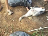 Chupacabras volta a atacar? Veja o que ocorreu no Paraná/BR