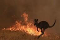Incêndios florestais na Austrália estão sendo causados pela ação humana (mas isto não nos é divulgado!)