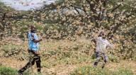 EIS QUE VÊM DIAS, DIZ O SENHOR DEUS, EM QUE ENVIAREI FOME SOBRE A TERRA (Amós 8, 11-12)     Bilhões de gafanhotos devastadores atacam cidades da África e estão devorando tudo pelo caminho