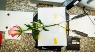Alteração de finalidade – Cientistas transformam rosa em um supercondensador de energia elétrica