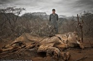 'A TERRA SERÁ POSTA EM DESOLAÇÃO...'(Miquéias 7,13) - Cientistas avisam: a sexta grande extinção em massa está aí, e é causada pelo homem