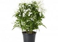 Plantas que são boas para ter no quarto, pois ajudam a adormecer