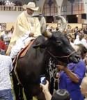 '... PORQUE NÃO SERÁ ASSIM SEM QUE ANTES VENHA A APOSTASIA...' (II Tes. 2, 3) – Padre entra na Santa Missa montado num touro