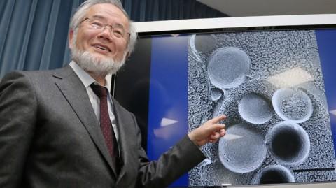 Yoshinori Ohsumi  é biologista celular e professor da Universidade de Tóquio.
