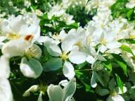 Entendendo a Natureza - Plantas podem ver, ouvir, cheirar e até reagir?