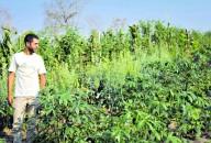 Agricultura sintrópica utiliza 75% a menos de espaço e água