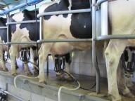 Você bebe leite? 28 coisas que você deveria saber