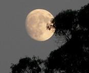 Os efeitos da lua cheia sobre homens, plantas e animais