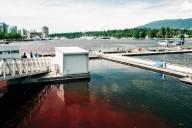 As águas de Vancouver ficam vermelhas como sangue