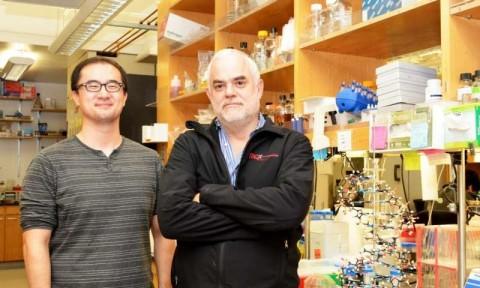 O professor Floyd Romesberg (à direita) e o estudante de graduação Yorke Zhang lideraram o novo estudo no The Scripps Research Institute.