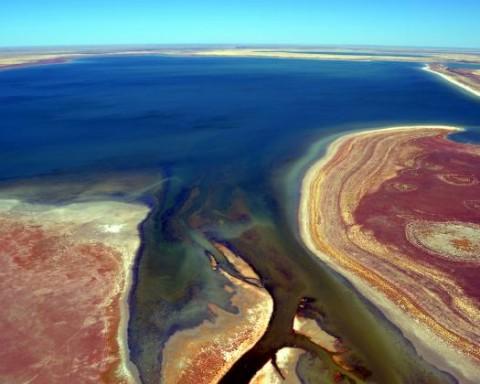 Milhares de aves encontradas mortas no mais importante reservatório de água e habitat de reprodução de aves migratórias da Austrália Ocidental, o Lago Gregory.