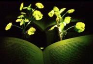 Plantas nanobiônicas - Cientistas alteram plantas para que elas gerem luz