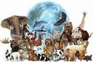 IMPORTANTE: Estudo revela que 90% dos animais surgiram ao mesmo tempo – O fim da base científica da teoria da evolução
