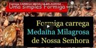 No Brasil, formiga carrega Medalha Milagrosa de Nossa Senhora (vídeo)