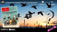 O que está acontecendo com os pássaros? (vídeo)