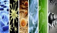 Epidemias, pandemias e pragas - Revelações para a confidente Luz de Maria