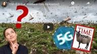 Extinção das abelhas, pragas de insetos: estariam sendo causadas pela tecnologia 5G?  (Vídeo)