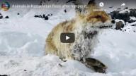 Frio mortal – Animais morrem congelados depois que temperaturas caíram para -51ºC no Cazaquistão